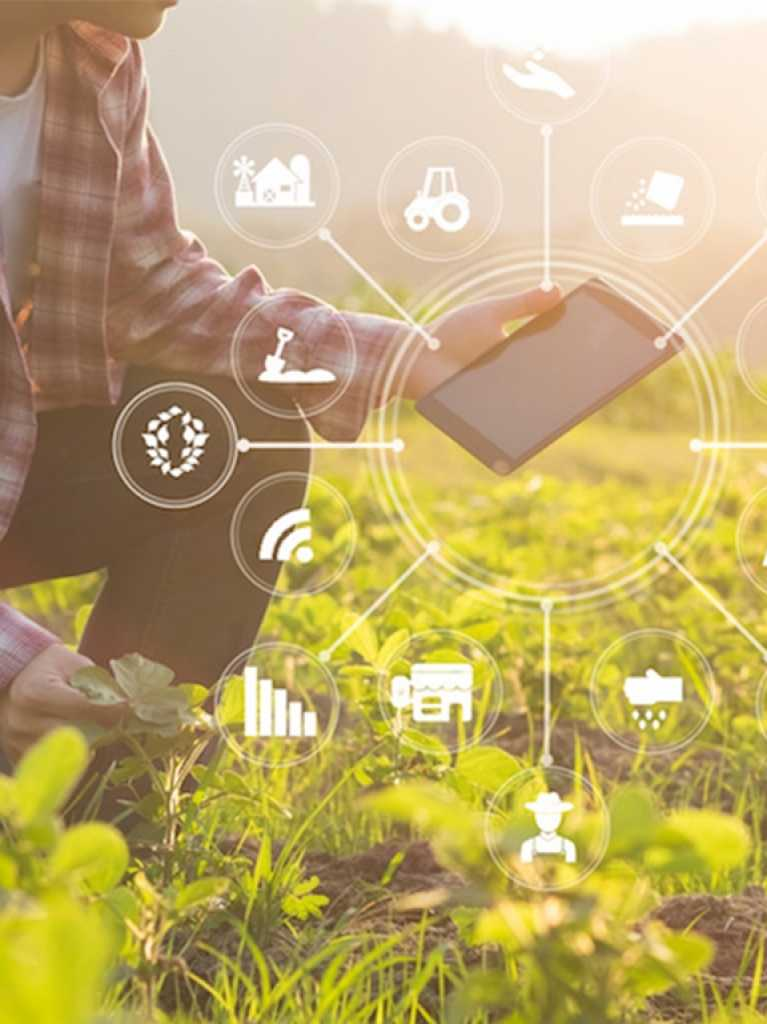 The potential of AI in the agribusiness sector